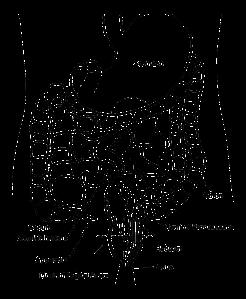 black-40607_1280