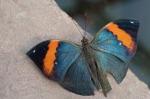 butterfly-892350_1920